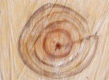 tree för spili 2 royaltyfria bilder