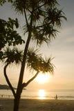 tree för strandpatongsolnedgång Arkivbild