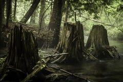 tree för stubbar tre Arkivbild