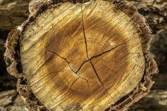 tree för stubbe för skoggrönskachampinjon Arkivfoto