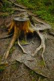 tree för stubbe för skoggrönskachampinjon Arkivbilder