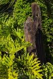 tree för stubbe för skoggrönskachampinjon royaltyfri fotografi