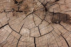 tree för stubbe för skoggrönskachampinjon arkivbild