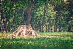 tree för stubbe för skoggrönskachampinjon Royaltyfria Bilder