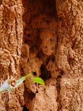 tree för textur för bakgrundsskäll gammal arkivfoto