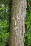 Tree face Stock Images