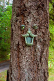 Tree Face Stock Photo