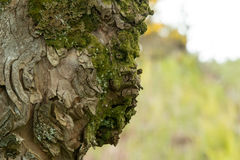 Tree Face Stock Image