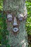 Tree face Royalty Free Stock Photos
