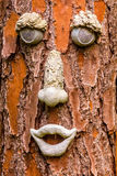 Tree Face. A funny face on a tree Stock Images