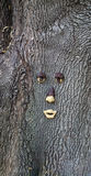 Tree with a face Stock Photography