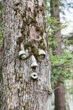 Tree face Royalty Free Stock Photo