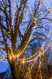 Tree with fairy lights Royalty Free Stock Photography