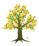 Tree in fall. A tree with fall colored leaves isolated on white Royalty Free Stock Photo