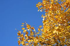 Tree during fall Royalty Free Stock Photography