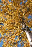 Tree during fall stock image