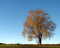 Tree in the fall Stock Photo