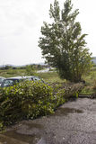 Tree fall down. Tuscany, Italy, September 19, 2014: After the hailstorm. Disaster after a power hailstorm in Tuscany, Italy. A tree fall down, after breaking Stock Image