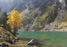 Tree and fall at Lake Gaube, natural park of the Pyrenees. Royalty Free Stock Photos