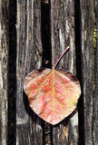 Tree fall leaf. Tree leaf on wooden surface Royalty Free Stock Images