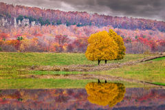 Tree in the fall. With reflection Royalty Free Stock Photography