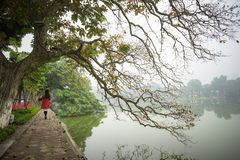 Tree in fall season at Hoan Kiem lake with Vietnamese girl wear traditional dress Ao Dai walking by lake in Hanoi.  royalty free stock photo
