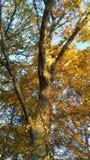 Tree 04. Tree in fall sun Stock Photos