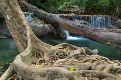 Tree fall and waterfall Stock Photography