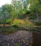 A tree fallen into a forest stream. Autumn time.n stock photo