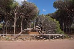 Tree. Fallen tree on the island of Caprera Sardinia Stock Photos
