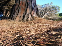 Tree. Fallen tree on the island of Caprera Sardinia Stock Photo