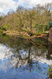 Tree fallen over the water Royalty Free Stock Photos
