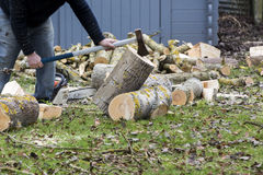 A tree falling in the garden while being cut Royalty Free Stock Photo