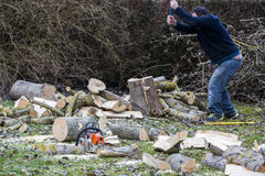 A tree falling in the garden while being cut Royalty Free Stock Photos
