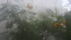 The tree in falling rain outside the house. Backgrounds stock video footage