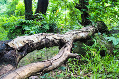 Tree falling Stock Images