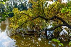 Tree falling into water Stock Photo