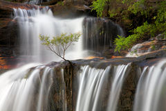 Tree in falls. A small tree growing out of a waterfall Stock Photo