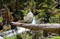 Tree falls across mountain stream Royalty Free Stock Image