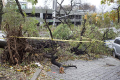 Tree falls on car Stock Photos
