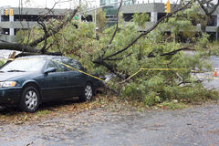 Tree falls on car Stock Images