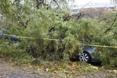 Tree falls on car Stock Photography