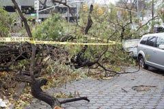 Tree falls on car Stock Photo