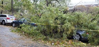 Tree falls on car Stock Image