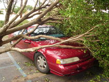 Tree falls on car after hurricane Stock Photo