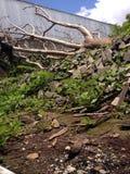 Tree falls Royalty Free Stock Photos