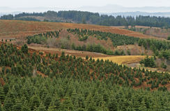 Tree Farm Stock Photography