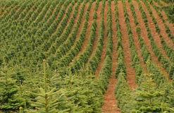 Tree Farm Stock Images