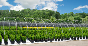 Tree farm nursery in the country Stock Photography