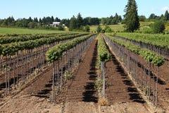 Tree farm, Oregon. royalty free stock photos
